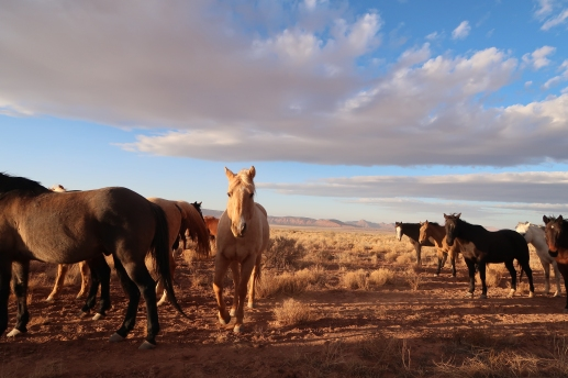 Grand Canyon west, horses, BLM